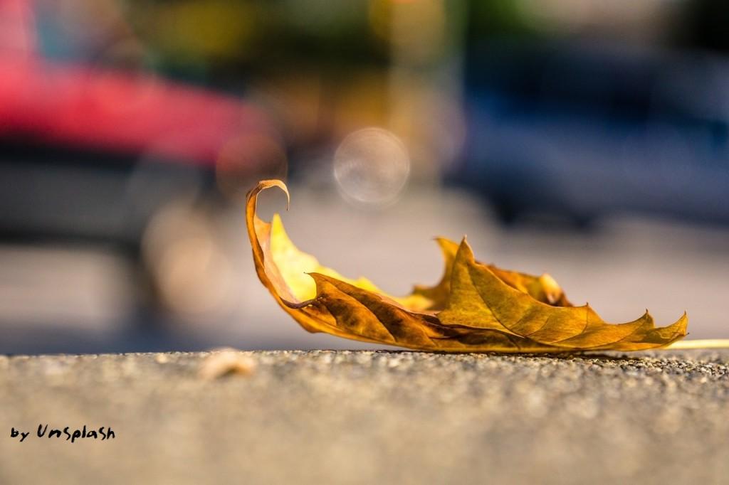 pic-1-by-unsplash-leaf-1082118_1280